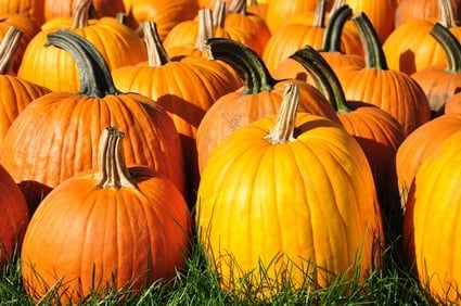 Fotolia 44447602 XS Motivate Me Monday: 10 Health Benefits of Pumpkins