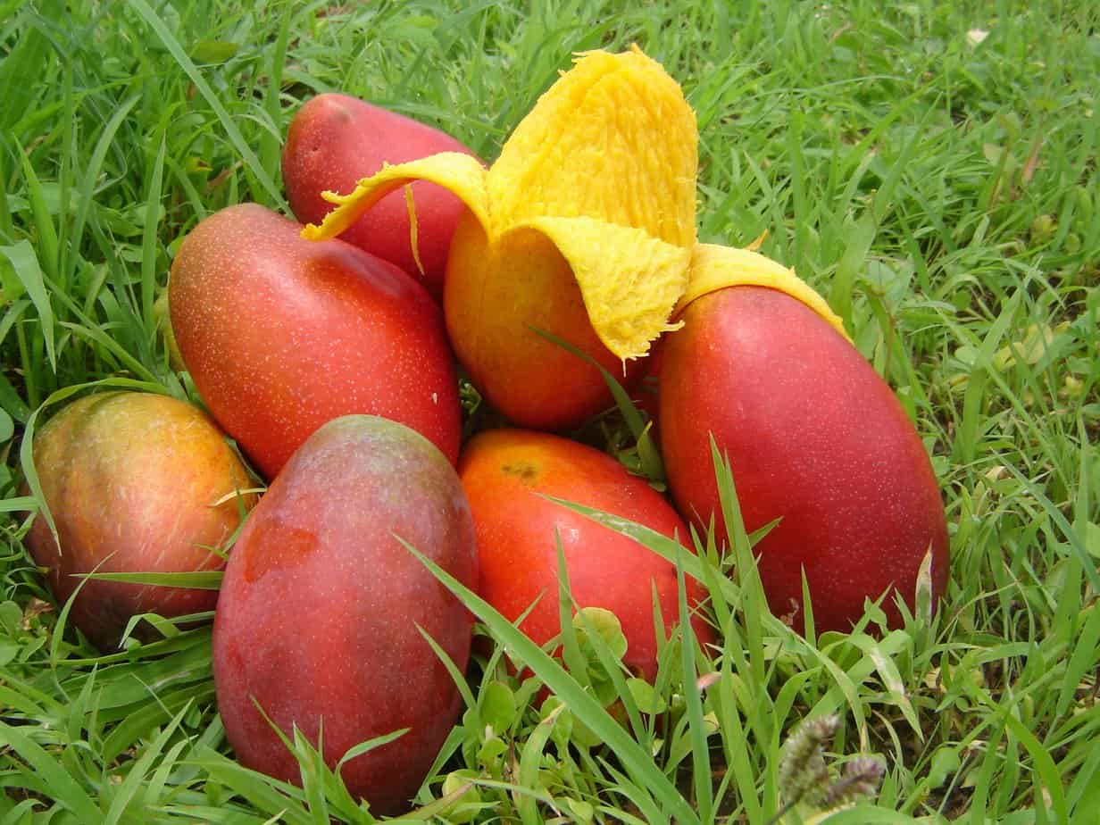 How to Choose a Mango and the Health Benefits 2