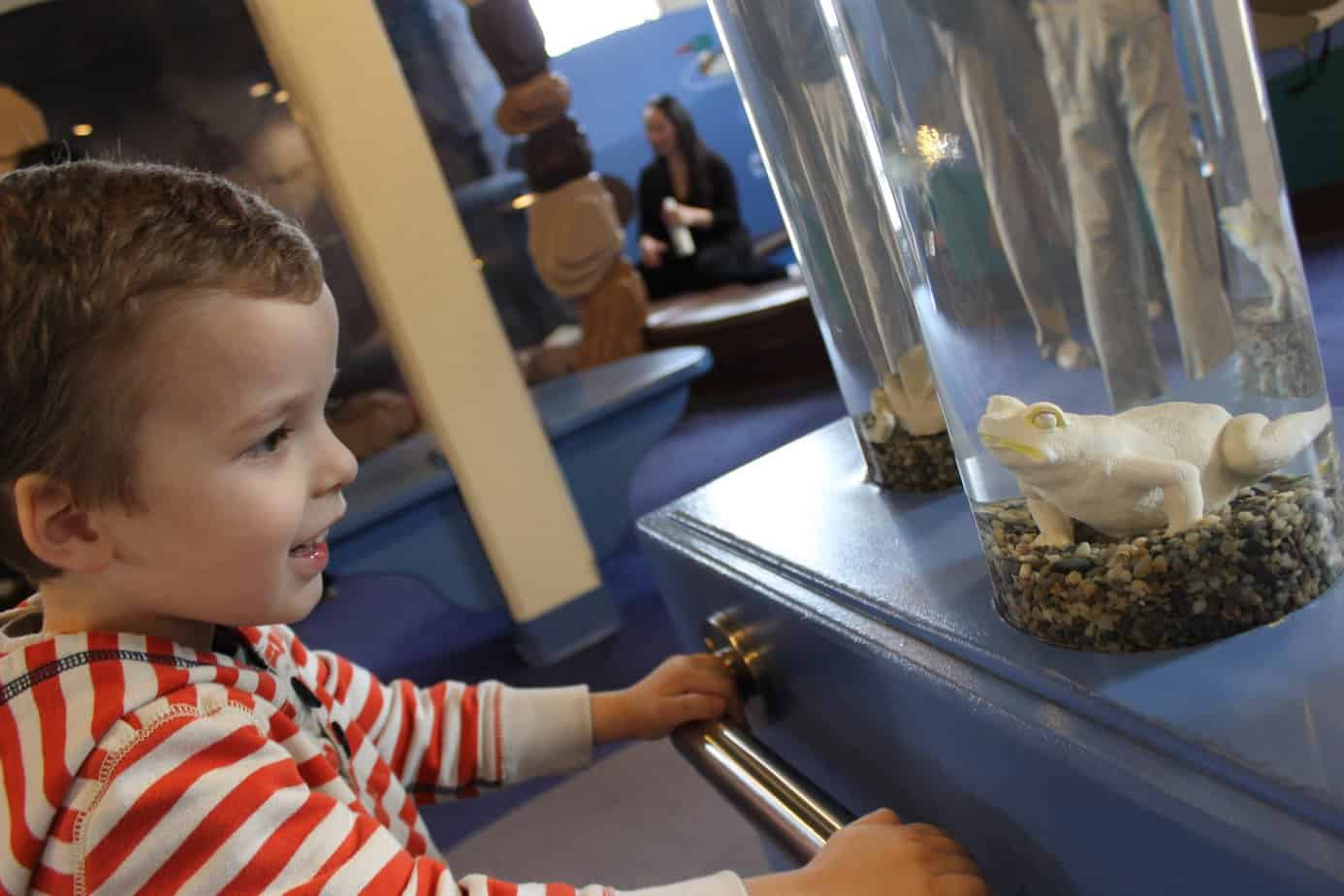 Bay Area Discovery Museum: Family Fun For All Ages 12