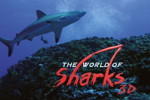movie_sharks3d