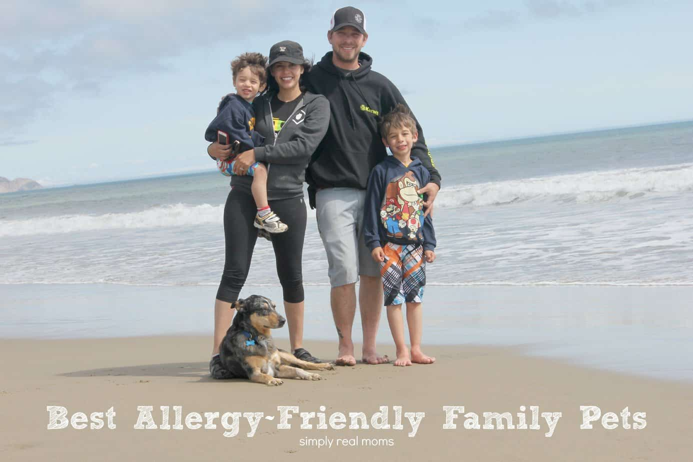 Best Pets For Families With Allergies 2