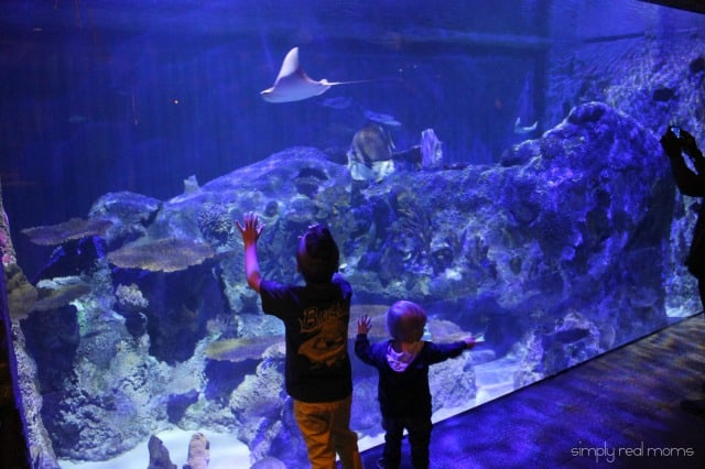 Shark Reef Aquarium Wall
