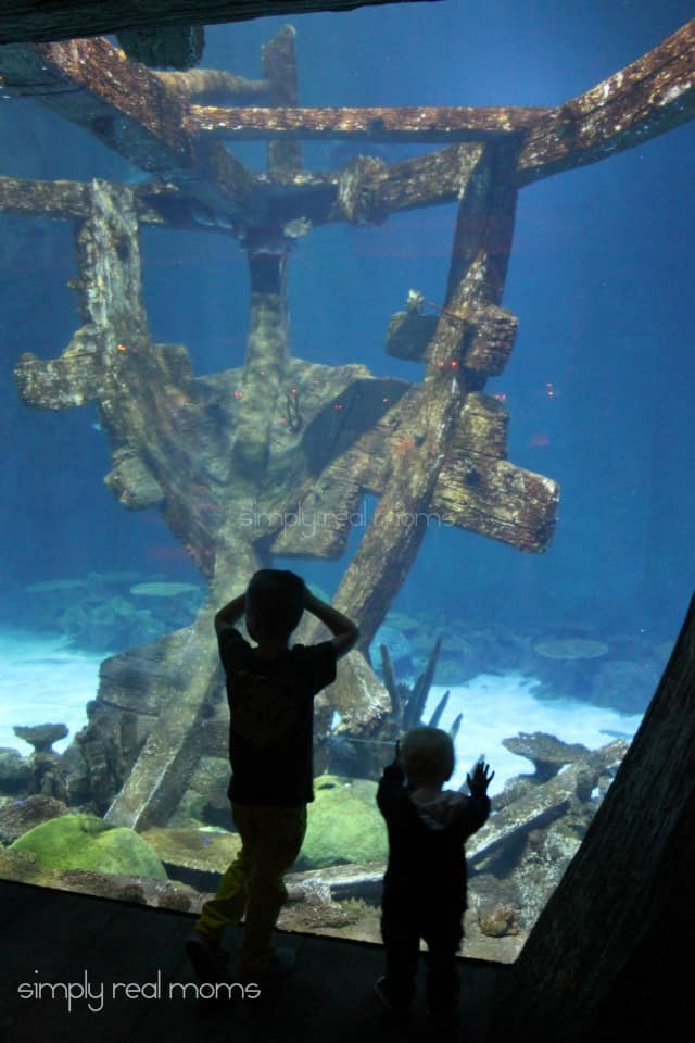 Shark Reef Shipwreck