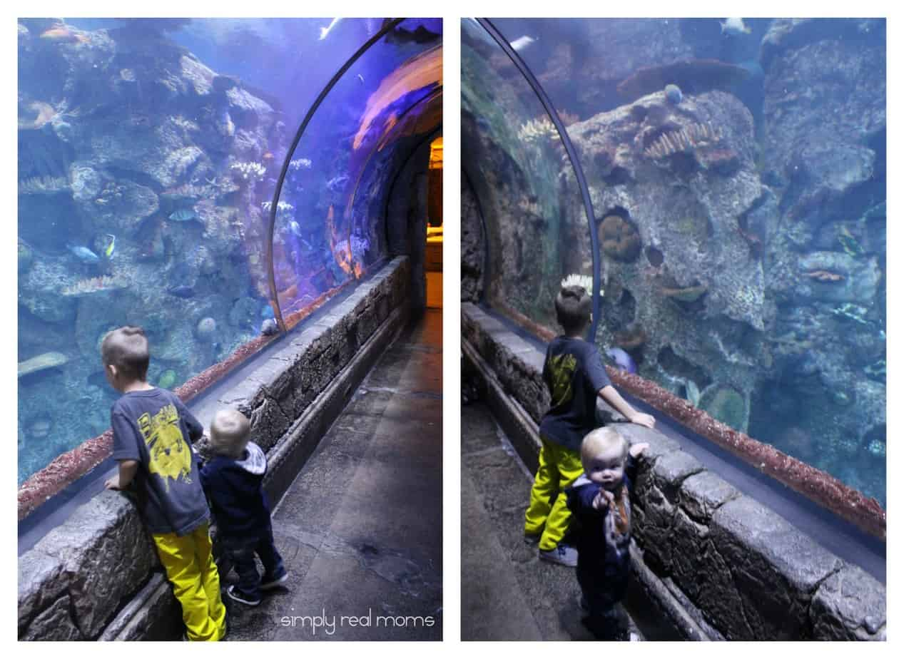 Shark Reef Tunnel