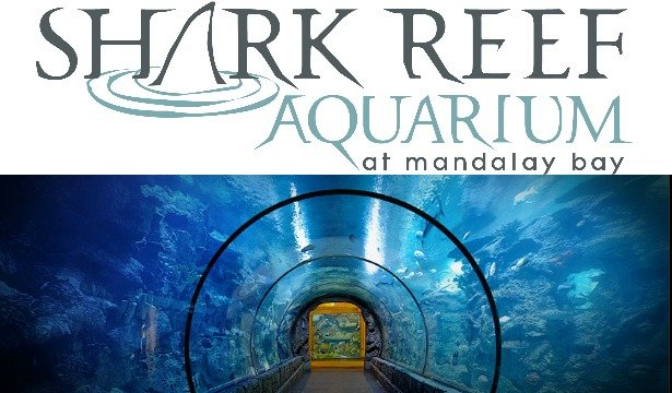 Family Friendly Las Vegas: Shark Reef at Mandalay Bay  6