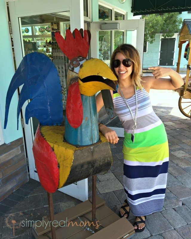 Key west chickens