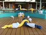Towel animals canival cruise